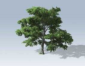 Tree - White Oak 3D model