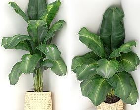 Plants collection 313 3D model