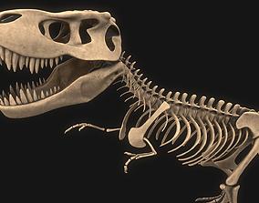 3D model T-rex Skeleton