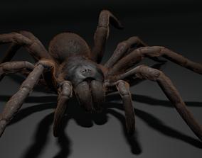 3D model Tarantula spider animating