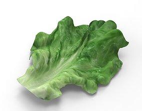 3D Lettuce - leaf