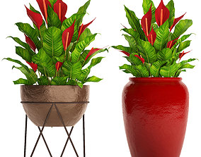 Spathiphyllum RED 3D