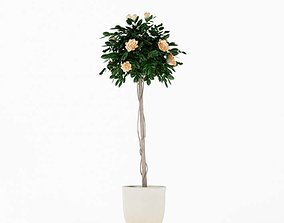 3D model Flowering Tall Potted Plant