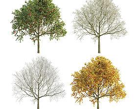 3D Apple Tree 5 Seasons
