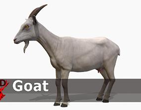 Goat female 3D model