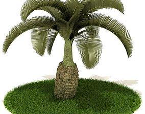 Lush Green Palm Tree 3D