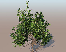 3D mangrove bush C rhizophora mangle