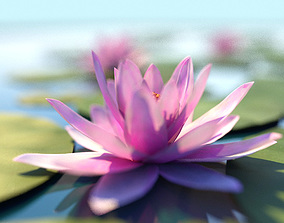 Water Lily - Lotus Plant 3D asset