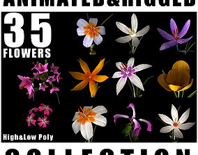 ANIMATED FLOWERS COLLECTION 3D model
