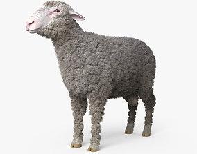 Sheep HD 3D model