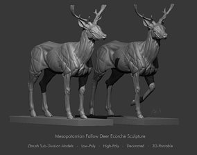 Mesopotamian Fallow Deer Ecorche Anatomy 3D model