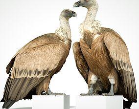 3D asset Vulture Bird