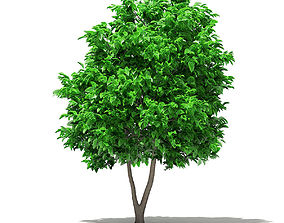 3D Grapefruit Tree