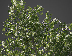 3D 2021 PBR Common Jasmine Collection - Jasminum