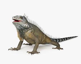 3D Iguana HD