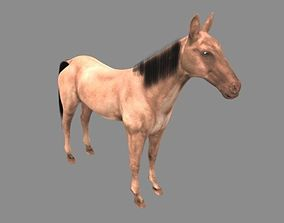 Modal Horse4 3D asset