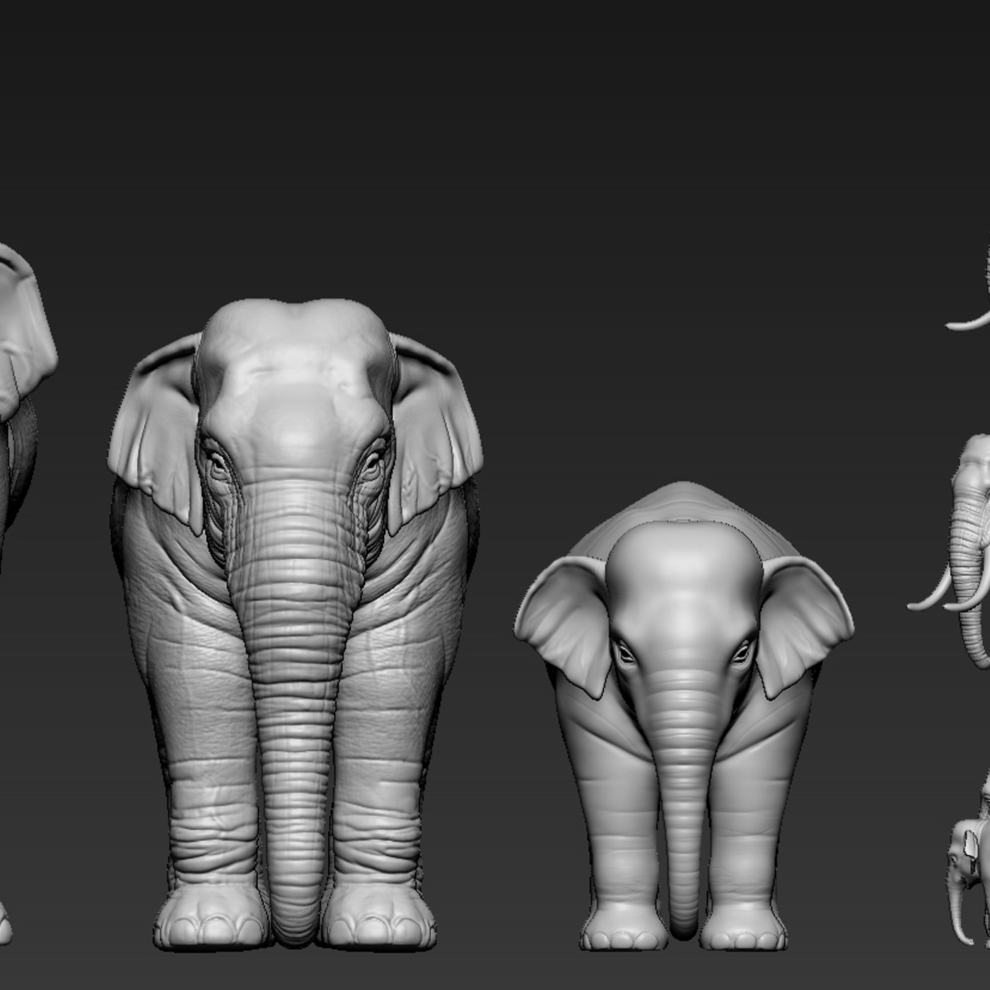 Asian elephant families