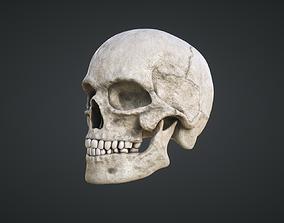 Human Skull 3D model game-ready