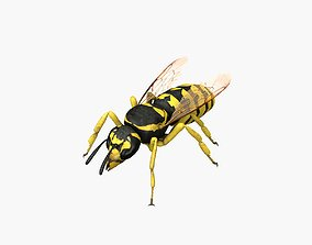 Wasp RIGGED 3D asset