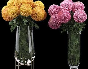 3D Chrysanthemum big