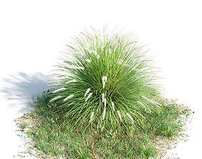 green Penisetum alopecuroides 44 am154 3D model