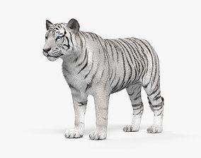 White Tiger HD 3D model