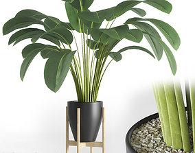3D model Indoor plant 01