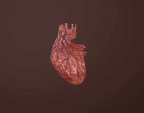 Heart animation heartbeat human organ 3D asset