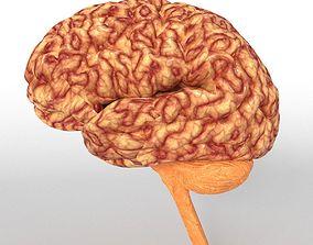 Anatomy Human Brain Nervous Cerebrum 3D model game-ready