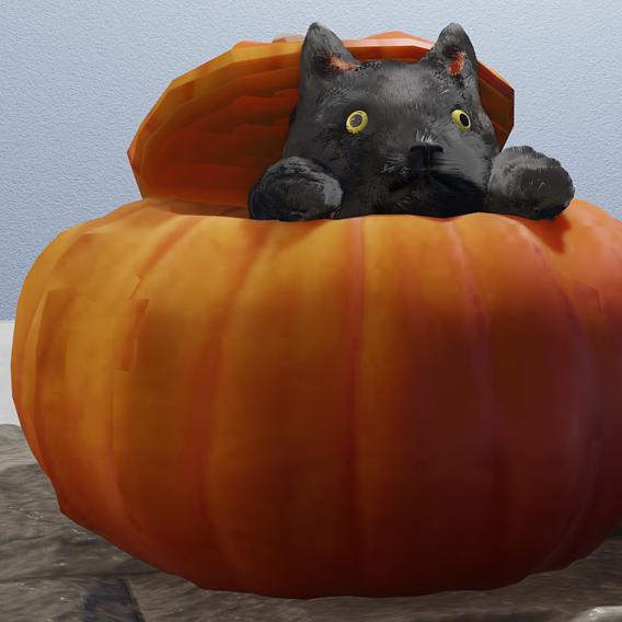 cat in pumpkon