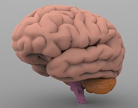 Brain with Interior 3D