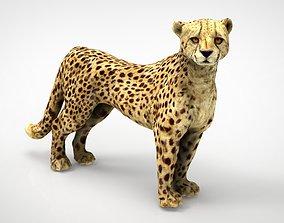 CHEETAH 3D asset VR / AR ready cat