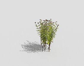 3D asset realtime Plant tree