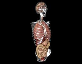 Anatomy 3D print model