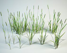 Phleum 10 grass set 3D model
