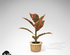 XfrogPlants Croton Petra 3D model