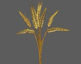 Wheat Golden model