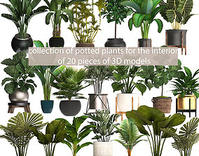 collection of plants for the interior of 20 pieces of 1