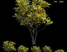 3D model Croton plant set 12