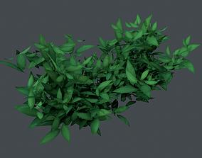 Bush Plant 3D asset