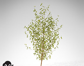 XfrogPlants Bloodtwig Dogwood 3D model