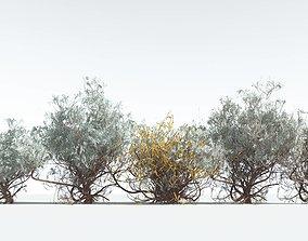 EVERYPlant Big Sagebrush --28 Models-- 3D