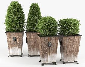 vase Green bush 3D model