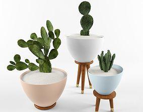 Cactus Set for decorating Your interiors 3D