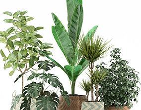 Plants collection 116 3D model
