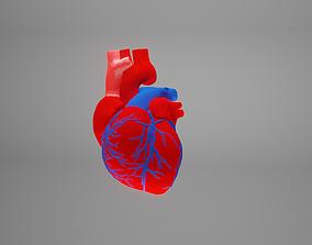 3D model heart beating