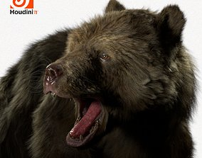 animated grizzly bear Model Houdini