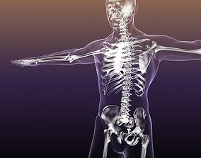 Human Skeleton in Body 3D