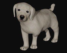 3D model Puppy Labrador