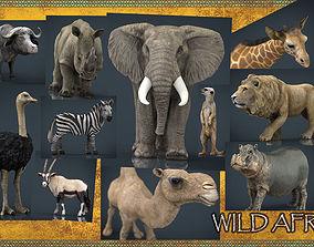 3D asset WILD AFRICA PACK